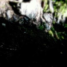 summer-2010-1481.jpg